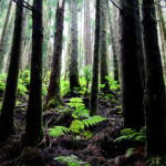 all-the-somethings-azoren-azores-wandern-hiking-forest