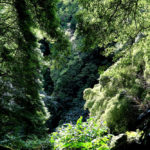all-the-somethings-wandern-azoren-azores-hiking-jungle-river