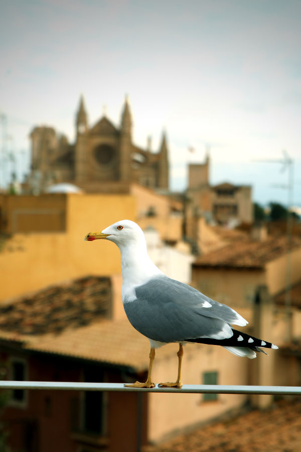 allthesomethings-somethings-far-away-mallorca-möwe